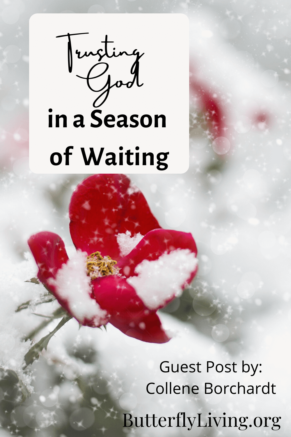 flower in snow-waiting on God's timing