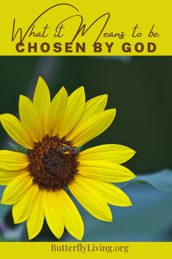 Daisy-what does it mean to be chosen by God