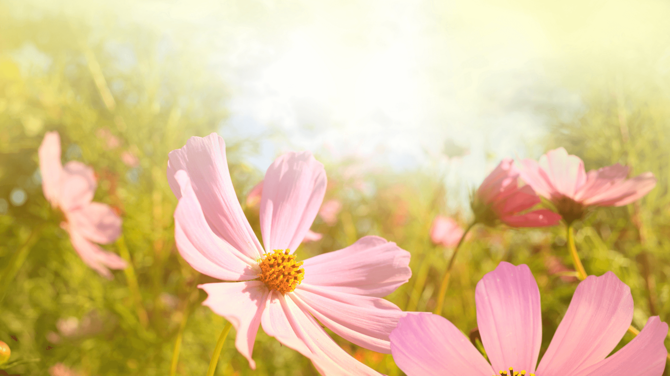 flowers-what does the Bible say about encouragement