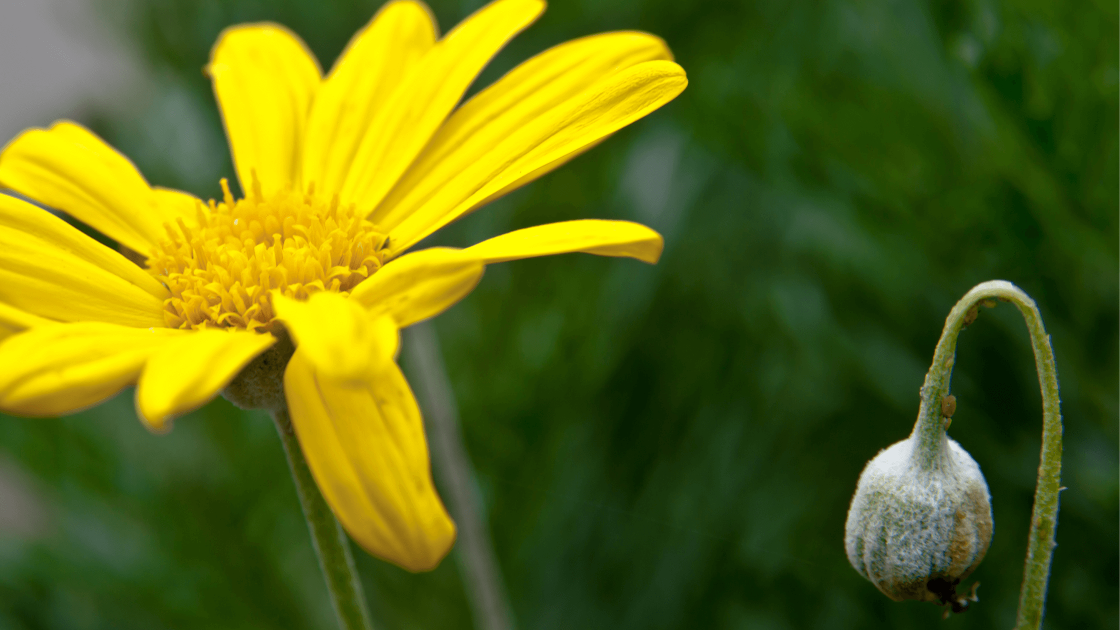 flowers-what is discouragement