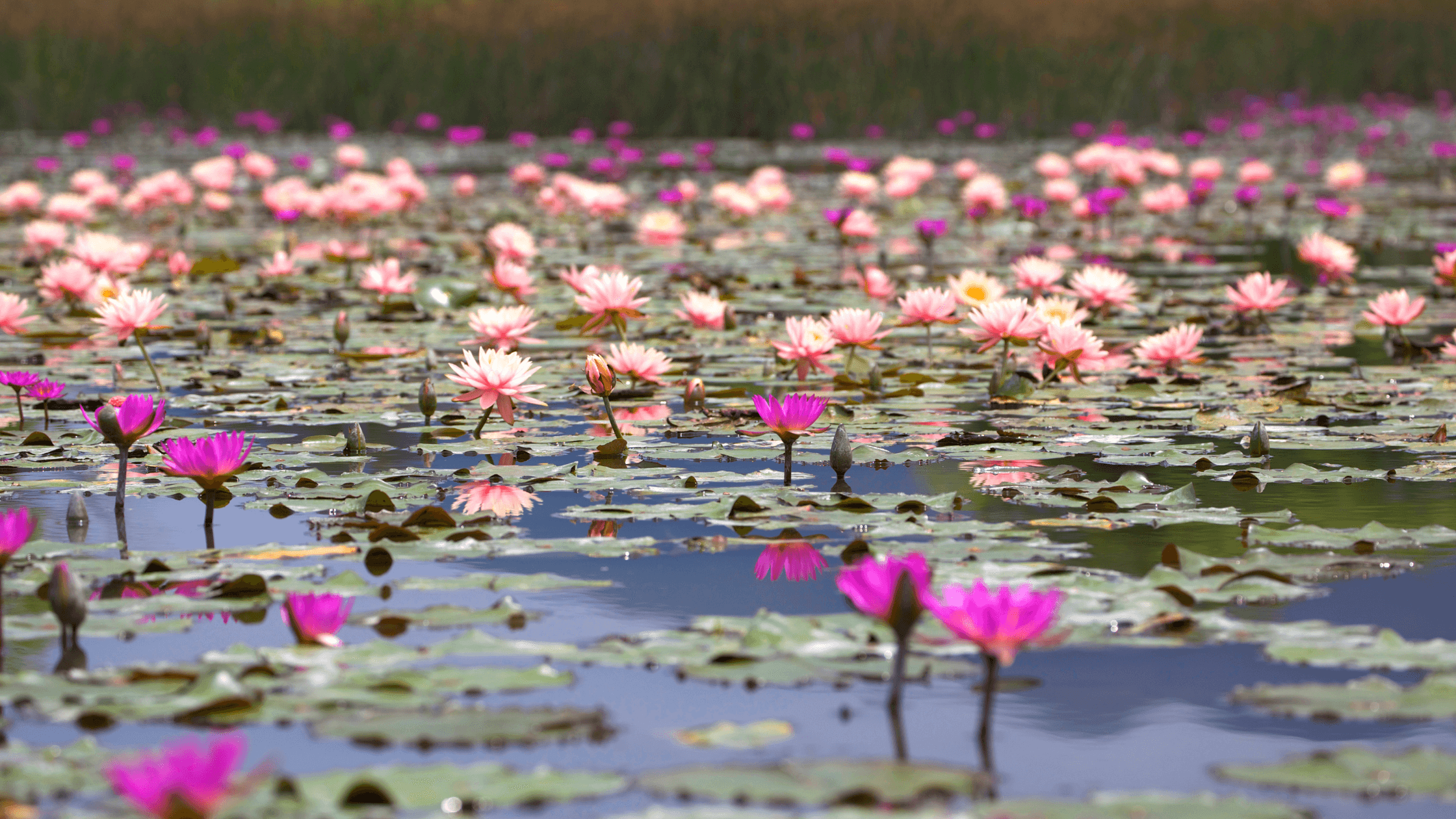 flowers on water-what does the bible say about faithfulness